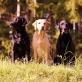 Die drei Damen vom Heveser Hoff - Foto: Lisa Hanke