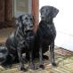 Cleo und Distel