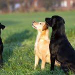 Die Hunde vom Heveser Hoff